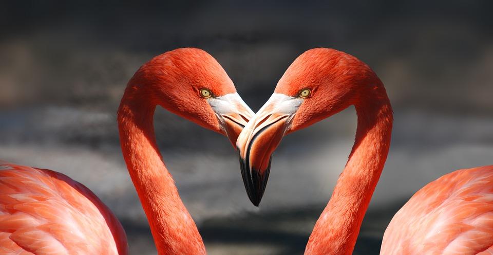 flamingo-heart