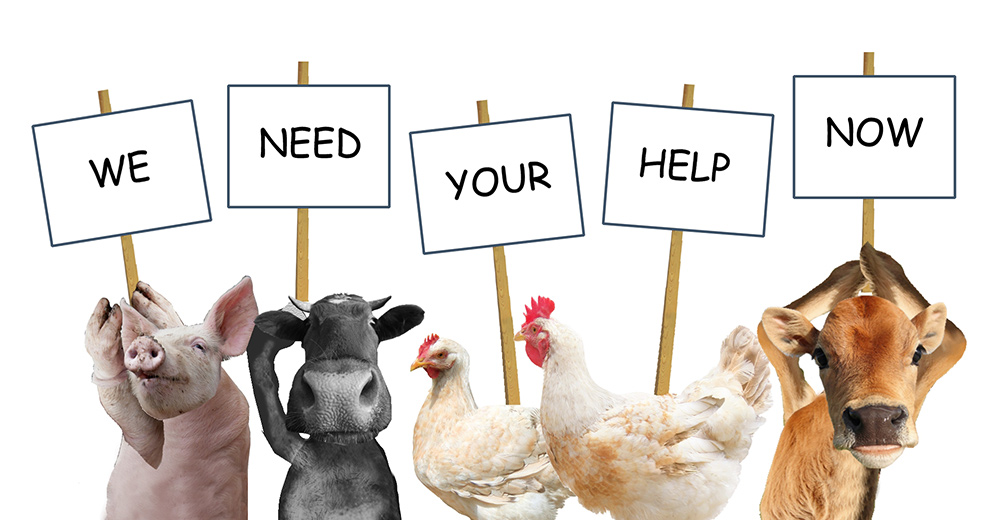 animals-with-placards