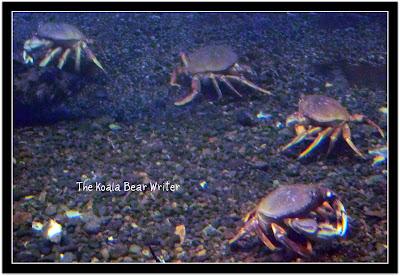 Undersea Crabs