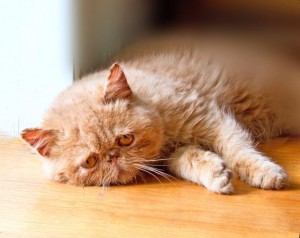 Common Cat Problems and the Best Ways to treat them