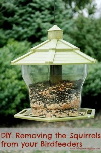 DIY: Removing the Squirrels from your Birdfeeders