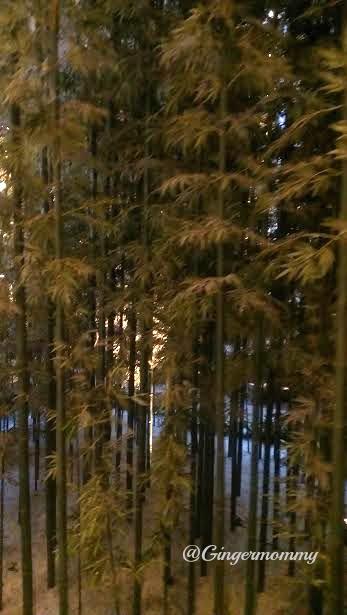 westin bamboo