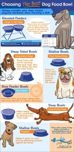 How to Choose the best bowl for your dogs breed
