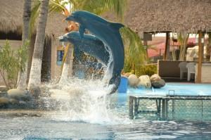Dolphin Discovery- Swim with dolphins #PVPressTrip