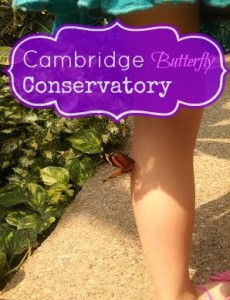 Cambridge Butterfly Conservatory #ExploreWR  #KWAwesome