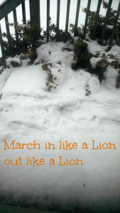 March in like a Lion out like a Lion