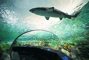 Walk through aquarium