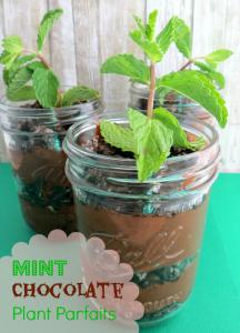 Mint chocolate parfait plants