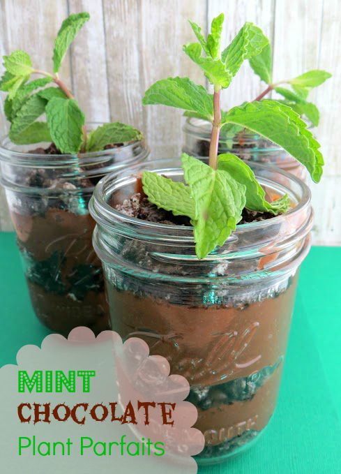Mint chocolate parfait plants