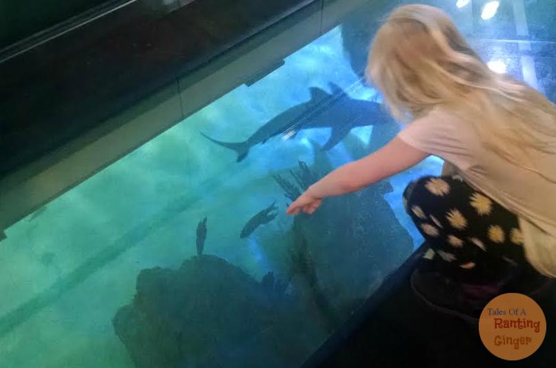 aquarium-floor