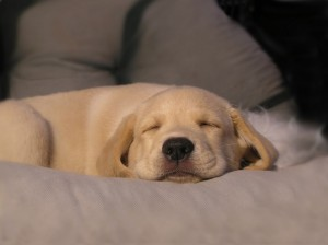 Does Your Dog Sleep Through The Night? Mine Neither!
