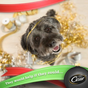 Make sure you include your pets this holiday season #TreatYourPet (Giveaway)