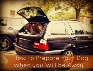 Prepare your dog for your being away