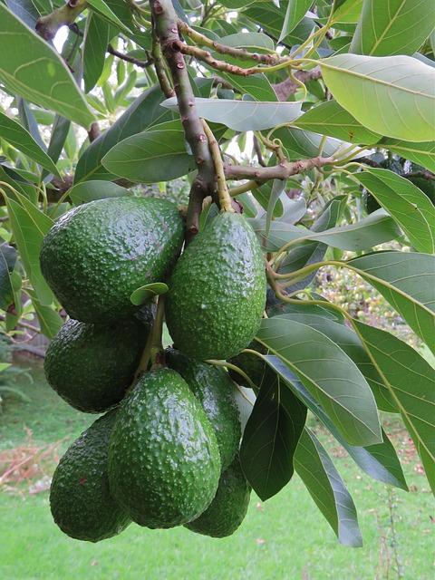 avocado-1304022_640