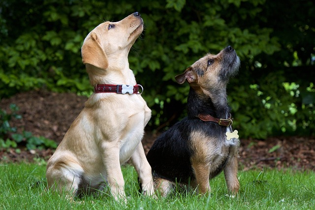 dogs-930727_640