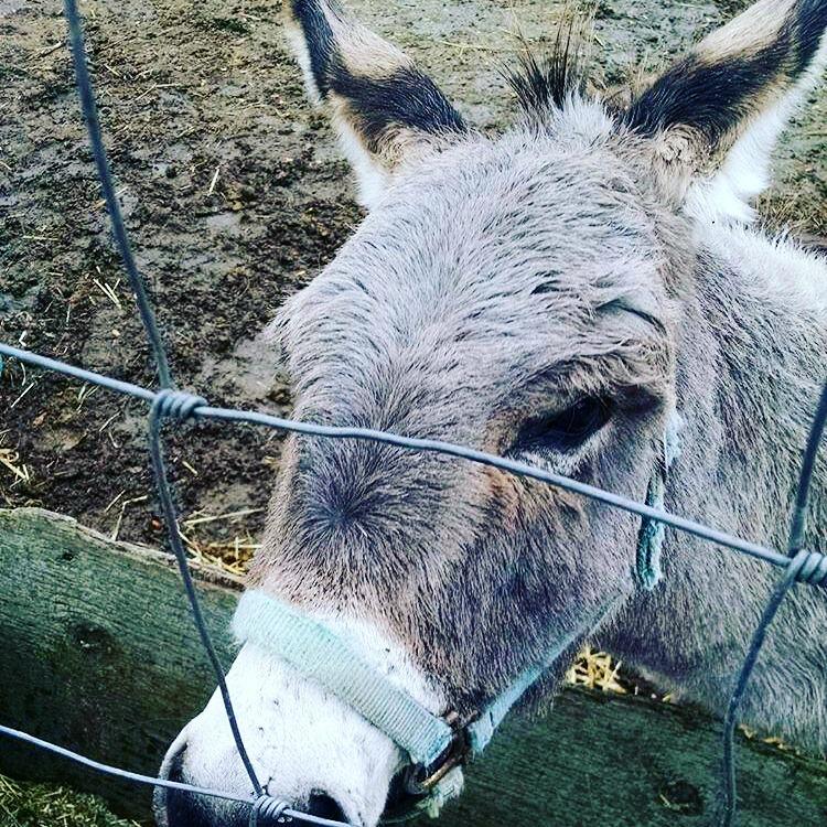 donkey-farm