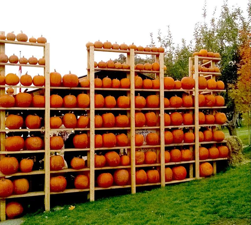 pumpkin-wall