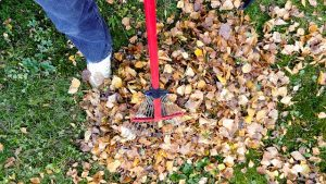 Cleaning Up Your Yard Before Spring Arrives